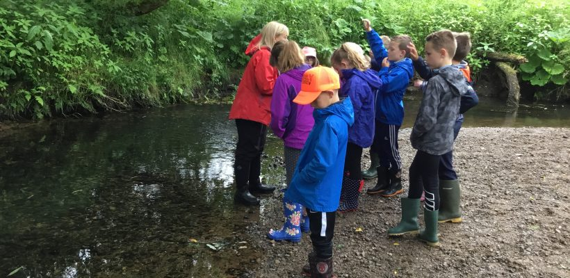 Year 4's Trip to Cuerden Valley Park- 20th June 2018