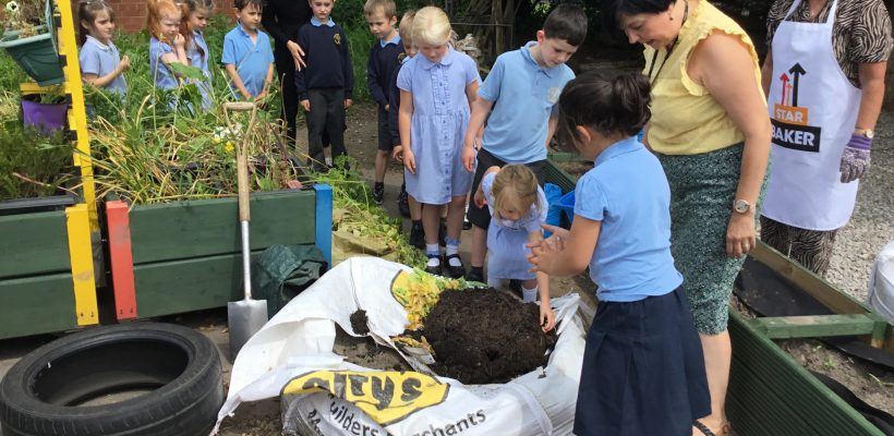 Year 1 dig up and then eat their potatoes – June 2021