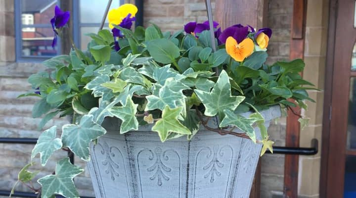 Sooty's Plants are amazing!! – April 2019